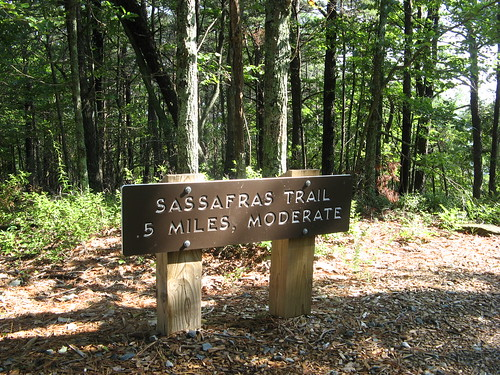 Sassafras trail