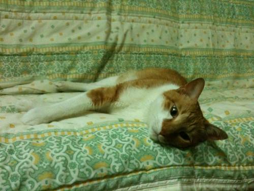 夏天到了貓發懶