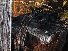 Barbed Wire (dbnunley) Tags: color treetrunk finepix barbedwire nik blueridgeparkway topaz fencepost hs10 efex fencec