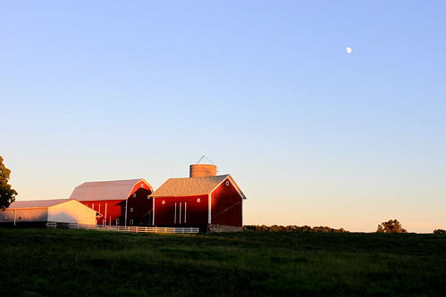 Why Are Most Barns Red?