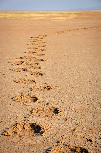 ElephantTracks