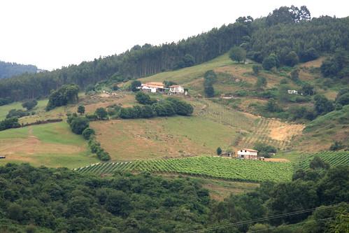 Cantabria Vinyard