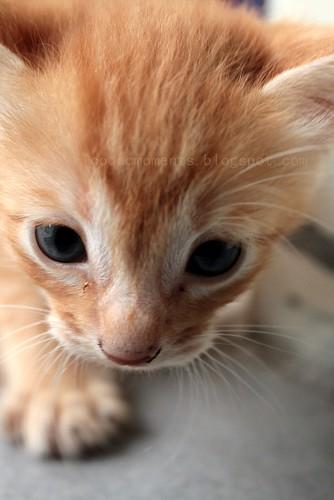 lilttle kitten