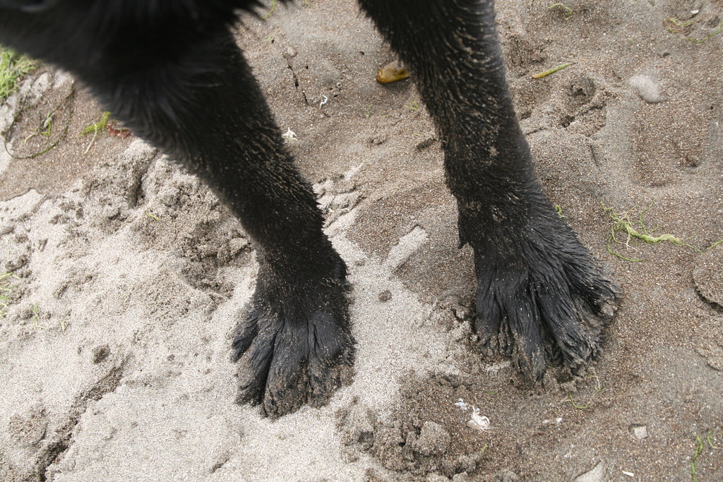 A close up of Cancun's wet, sandy feet from Stinson Beach.