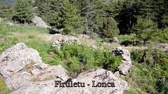 Les bergeries ruinées de Firuletu