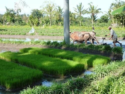 Bali-Tirtagangga (73)