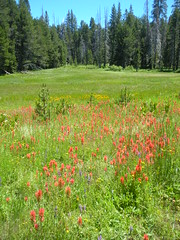 McGurks Meadow with Indian Paintbrush