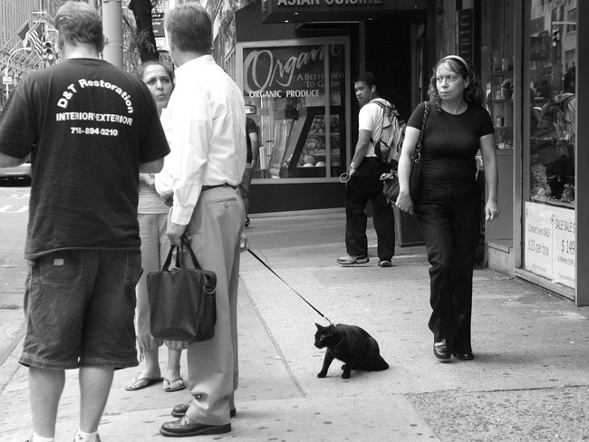 Cat on a Leash, Midtown
