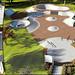 Portland ME Skater's Get An Amazing Skatepark!