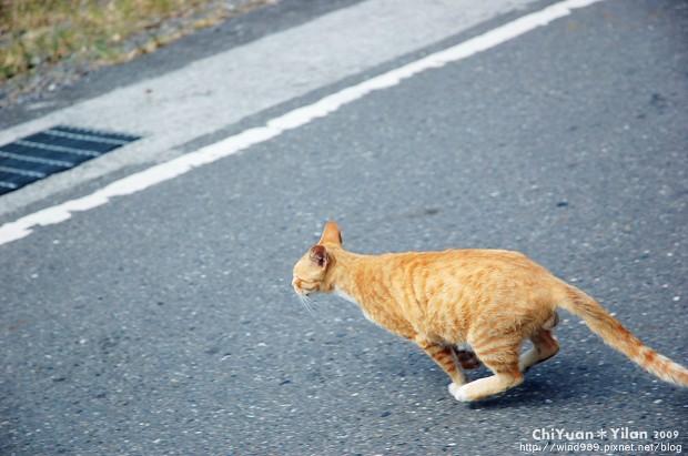 衝刺吧貓01.JPG