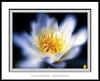 Atracción (Jose Luis Mieza Photography) Tags: flowers flores flower fleur fleurs flor benquerencia florews reinante jlmieza reinanteelpintordefuego joseluismieza
