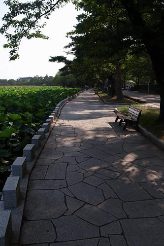 高田公園のはす