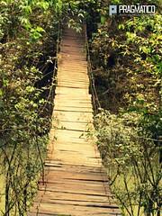 Puente colgante Mocona Misiones (Pragmtico DCV) Tags: naturaleza verde blanco puente madera agua selva salto caminata catarata misiones horacio colgante trillia mocona