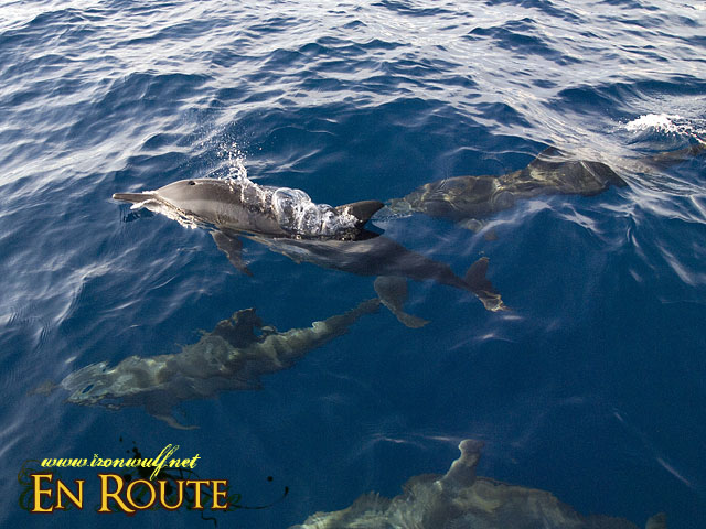 Dolphins up close