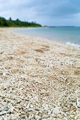 Summer! #3 (Guwashi999) Tags: sea summer beach coral japan sigma okinawa foveon  ishigakijima ishigakiisland dp2  sigmadp2