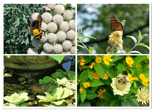 Bees & Company