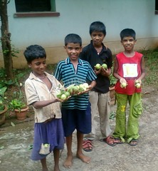 A Rich Harvest (kalpataru203) Tags: city fruit harvest guava urchins amrud bhuabneswar