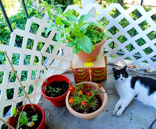 summer patio garden