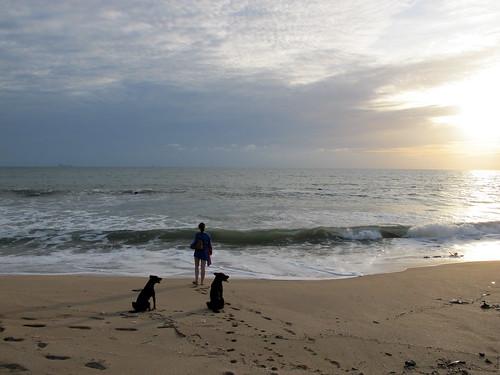 Beach sentinels