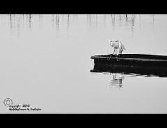 ..      | Explore | (Abdulrahman AL-Dukhaini || ) Tags: nikon 18200  2010  d90      abdulrahman      platinumphoto   lens18200mm        aldukhaini
