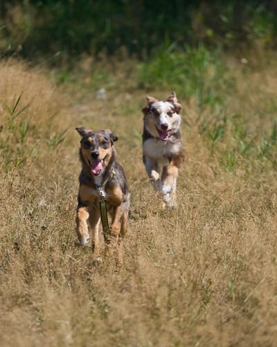 pups (10)