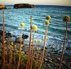 Binigaus (Jaume Salvà i Lara) Tags: sea beach coast menorca 2010 dianamini barrumbo 20100818dianaminib müller200 leicanistas