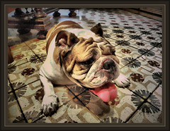 KAILY-REPOSO DEL GUERRERO-PERROS-PERRA (Ernest Descals) Tags: dog perro fotos perros