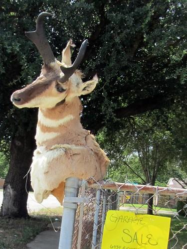 Blaspheme - Pronghorn Antelope