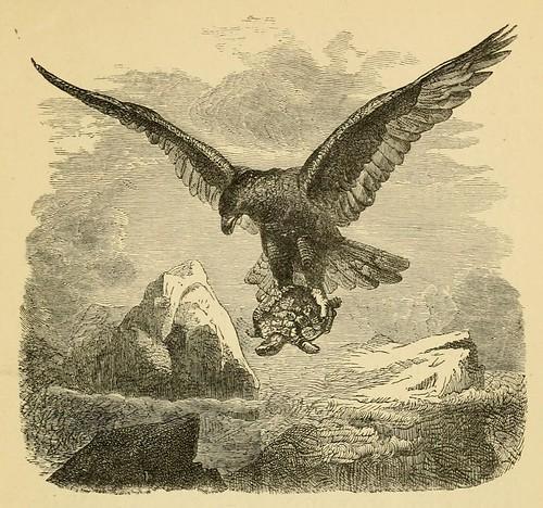 Aquila et Testudo
