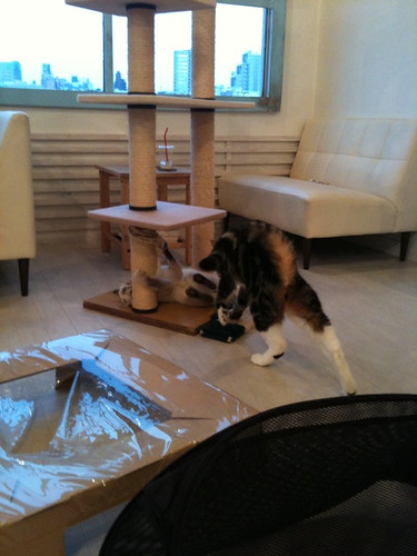 cat cafe3
