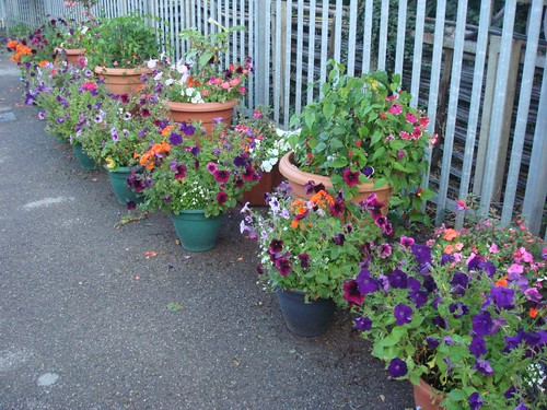 "Rickmansworth ""Underground in Bloom"" Competition Entries by cormac70"