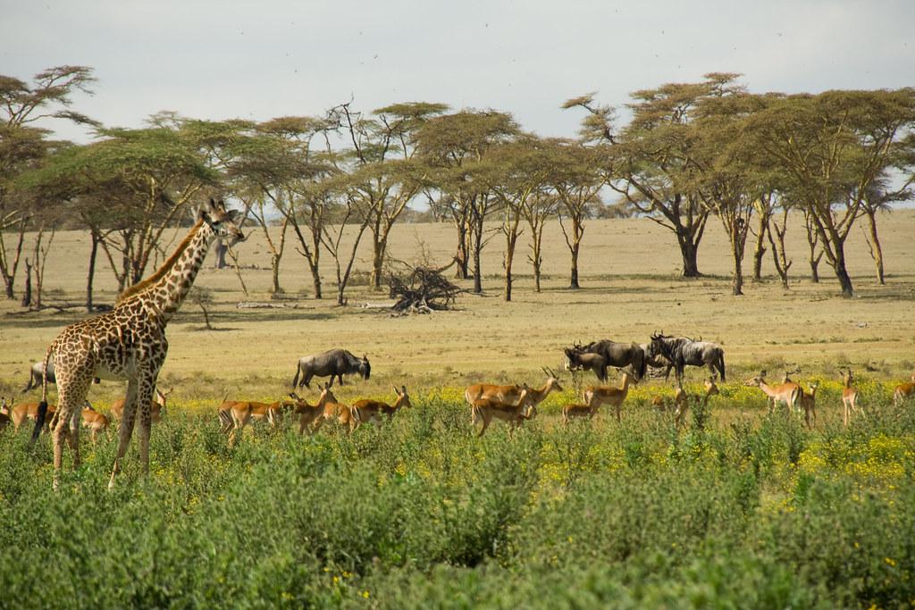 Wildlife - Crescent Island, Lake Naivasha, Kenya