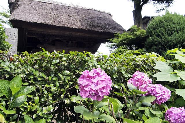 100625_093316_極楽寺