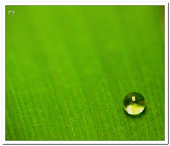 Simplicity (Explored) (Yogendra174) Tags: india color macro green nature lines canon waterdrop space drop negativespace negative maharashtra waterdrops liquid pune joshi macrophotography leadinglines yogendra dcr250 raynox raynoxdcr250 canonrebelxs grassleaf sigmaapodgmacro70300