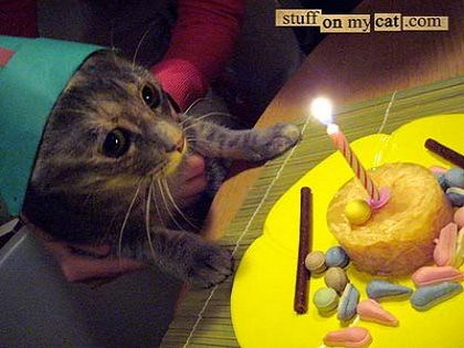 birthday+cat+potential+2