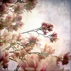 hana no tsuki (Katrin Ray) Tags: sky moon toronto ontario canada flower spring blossom textures delight bloom digiart layers magnolias katrinray texturebylesbrumesthankyou texturebydogmathankyou monthofflowers hananotsuki  floralmoon flora
