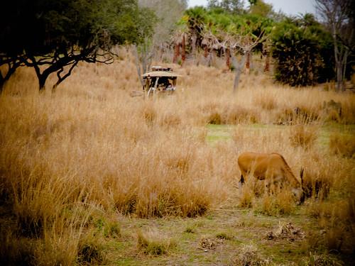 Safari v1