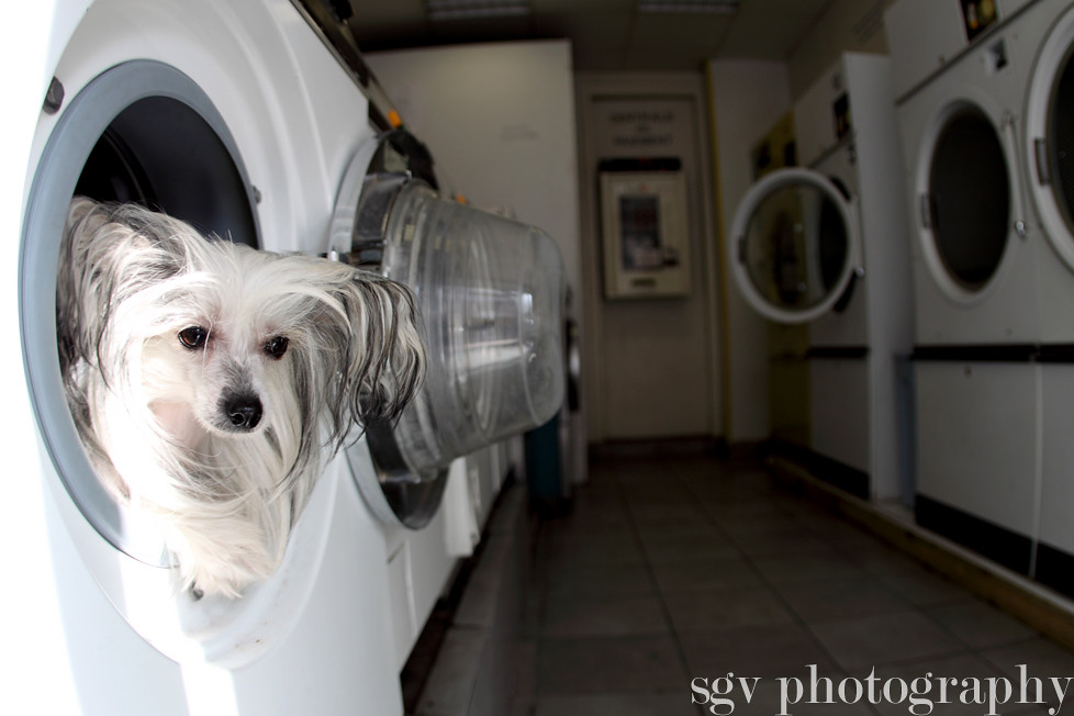 6/52 weeks of Molly - Laundry day...