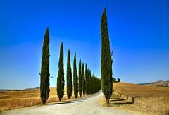 Poggio Covili (giannipiras555) Tags: toscana alberi colline panorama landscape