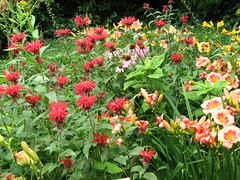 Bee Balm (AmyWoodward) Tags: beebalm monarda fantasticflower