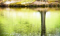 IT'S A TOPSY TURVY WORLD (Irene2727) Tags: reflection tree nature branches creek water ripples landscape scape pano panorama outside