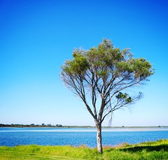 Tree Blue Lake Nature Beauty In Nature Plant Branch Water Sky Clear Sky Landscape No People Outdoors Rural Scene Deciduous Tree Scenics Beauty Flower Day (antorobinson) Tags: tree blue lake nature beautyinnature plant branch water sky clearsky landscape nopeople outdoors ruralscene deciduoustree scenics beauty flower day