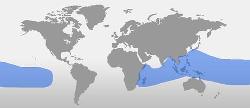 rugosus vf map