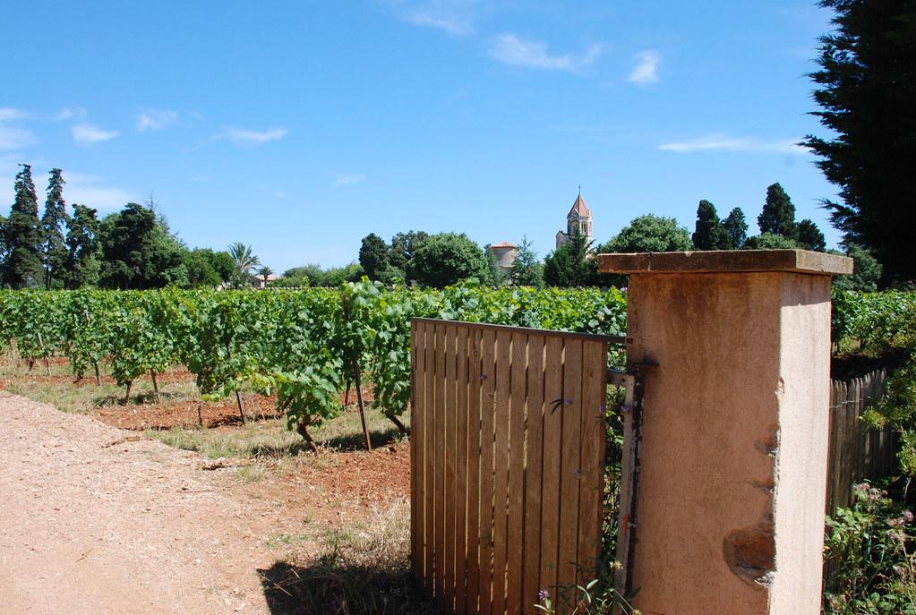 the vineyards that monks tend on Île Saint-Honorat