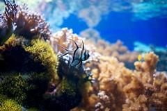 Aquaria vattenmuseum