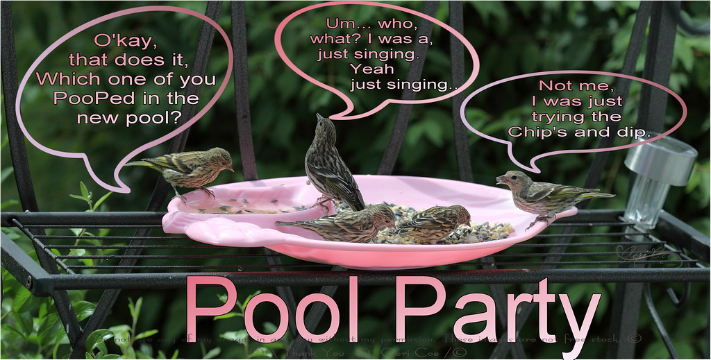 Pool Party.