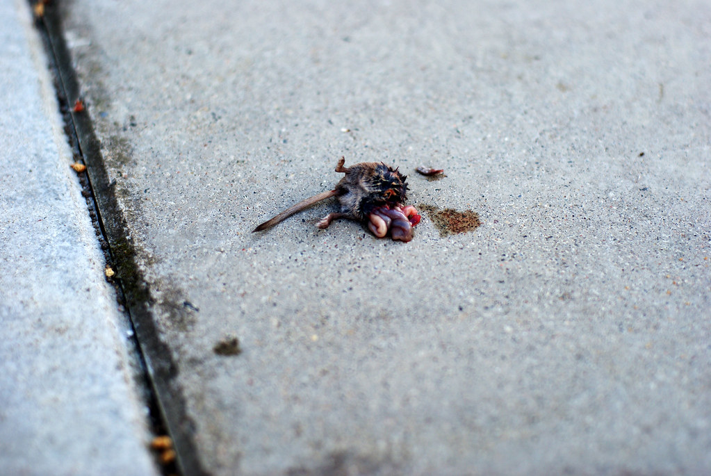 halv mus