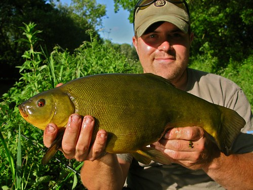tench3