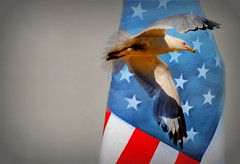 Free (floralgal) Tags: usa birds america freedom wings unitedstatesofamerica dar americanflag july4th redwhiteandblue starsandstripes independanceday daughtersoftheamericanrevolution falg theamericanflag seagullandtheamericanflag
