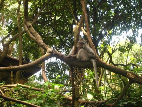Bali, Monkey Forest Ubud